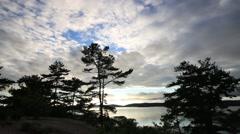 Georgian Bay Pine Trees Stock Footage