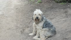 Shaggy dog on the trail. Stock Footage