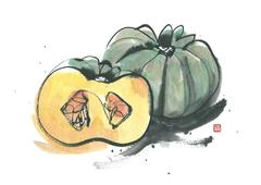 Squash - stock illustration