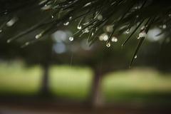 Raindrops on grass Stock Photos