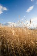 crop field vertical - stock photo