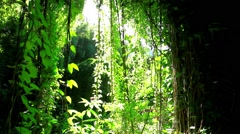 Amazonian rainforest, Brazil Stock Footage