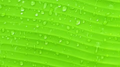 Surface of green banana leaf with drops of water - nature background Stock Footage