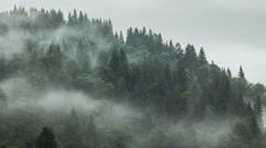 Timelapse of misty fog blowing over mountain with pine tree forest with rain on - stock footage