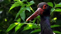 Stock Video Footage of black stork in forest