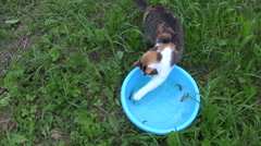 Cat fishing with claw small fish in bowl. Feline skills. Stock Footage