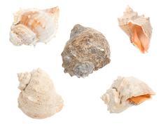 Seashells isolated on white Stock Photos
