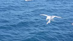 A seagul flies next to a ship close to the camera Stock Footage