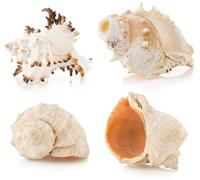 seashell on white - stock photo