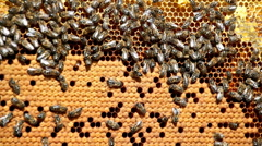 Frame with bee honeycombs filled with honey Stock Footage