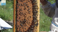Bee-keeper holds in hand a frame with honey honeycombs and bees Stock Footage
