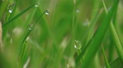 Fresh Green Grass Morning Dew Stock Footage