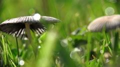 Magic Mushroom Green Grass Background Stock Footage