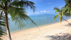 tropical beach and palm tree - stock footage