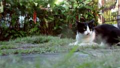 Cute cat relaxing on the grass in the garden, dolly shot Stock Footage