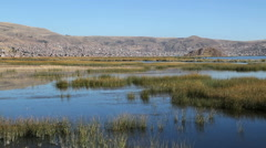 Peru Lake Titicaca tranquil wetland and masses of reeds  - stock footage