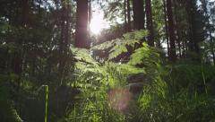 SLOW MOTION: Sun shining through tree trunks in the forest Stock Footage