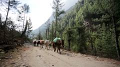Caravan of donkeys Stock Footage