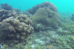 Coral reef in Zanzibar, steadycam shot, slow motion shot Stock Footage