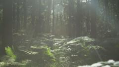 SLOW MOTION: Walking through mysterious forest - stock footage