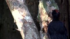 Black woodpecker in slow motion Stock Footage