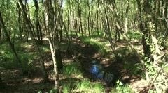 Drainage ditch in birch swamp forest + tilt up Stock Footage