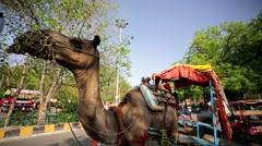 Camel Rickshaw Stock Footage