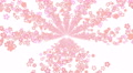 cherry blossom road B6 4k Footage