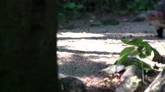 Stone marten - in summer Stock Footage