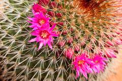 decorative cactus plants close up - stock photo