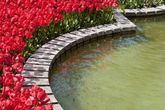 Field of tulips around a lake Stock Photos