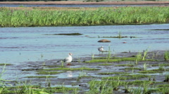 Gulls on the shore of the Gulf of Finland Stock Footage