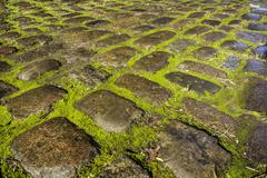 Mossy cobbles Stock Photos