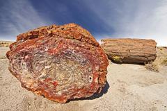 Petrified tree, petrified forest national park, arizona, usa. Stock Photos