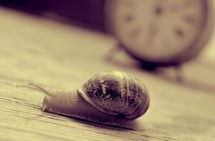 land snail and clock, in sepia tone - stock photo