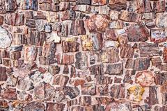 Petrified tree texture looking like stones. Stock Photos