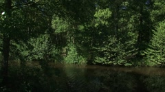 Drainage canal bordering birch swamp forest + pan bridge Stock Footage