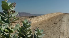 Salalah Arabia Orient Oman sultanate 004 stone wall behind desert plants - stock footage