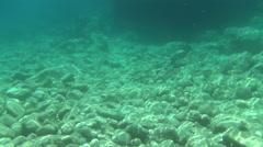 Krk underwater slowmo Stock Footage