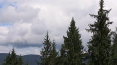 Tall green spruce in the mountains. Top-down view Stock Footage