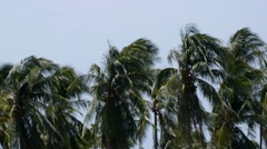 Trees at Strong Wind at the Beach. Stock Footage