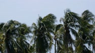 Stock Video Footage of Trees at Strong Wind at the Beach.