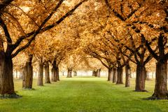 magnificent autumnal scenery - stock photo