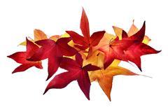 Arrangement of autumn leaves Stock Photos