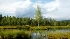 Early morning autumn lake in dreamy forest, young tree on island in middle. - stock footage