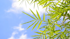 Bamboo leaves moving against cloud and blue sky Stock Footage