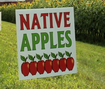 Native apple sign blows in wind Stock Footage