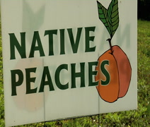 Native peach sign zoom out Stock Footage