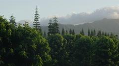Coffee Plantation Cloudy Mountain HD Stock Footage