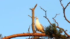 Seagull big white on a branch. colony of birds. voices of birds Stock Footage